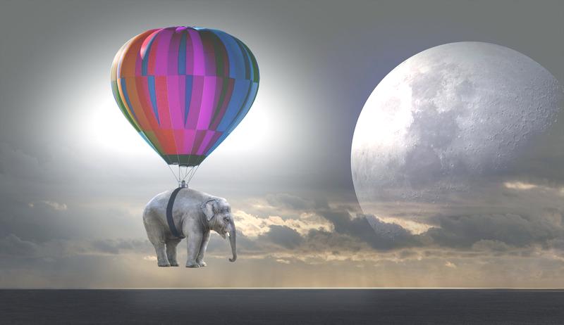 In viaggio con Jung, l'elefante