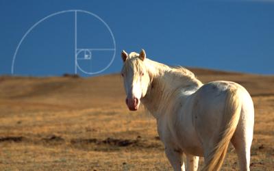 Un cavallo sulla strada di Fibonacci: la nuova guida operativa per Counselor e Coach