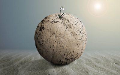 La resilienza non basta più: meglio l'exaptation